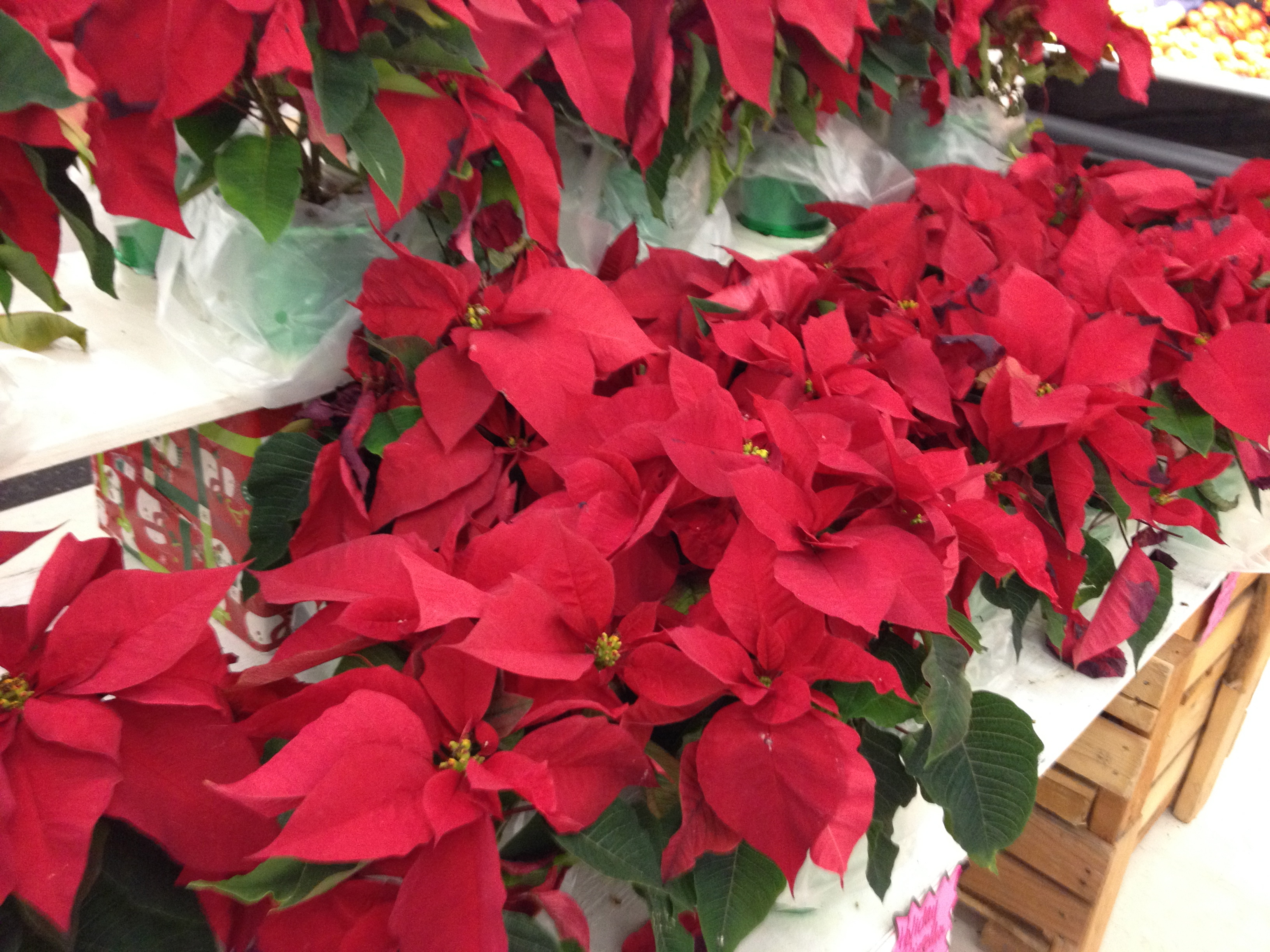 Day 18 – Random Act of Christmas Kindness – Nursing Home