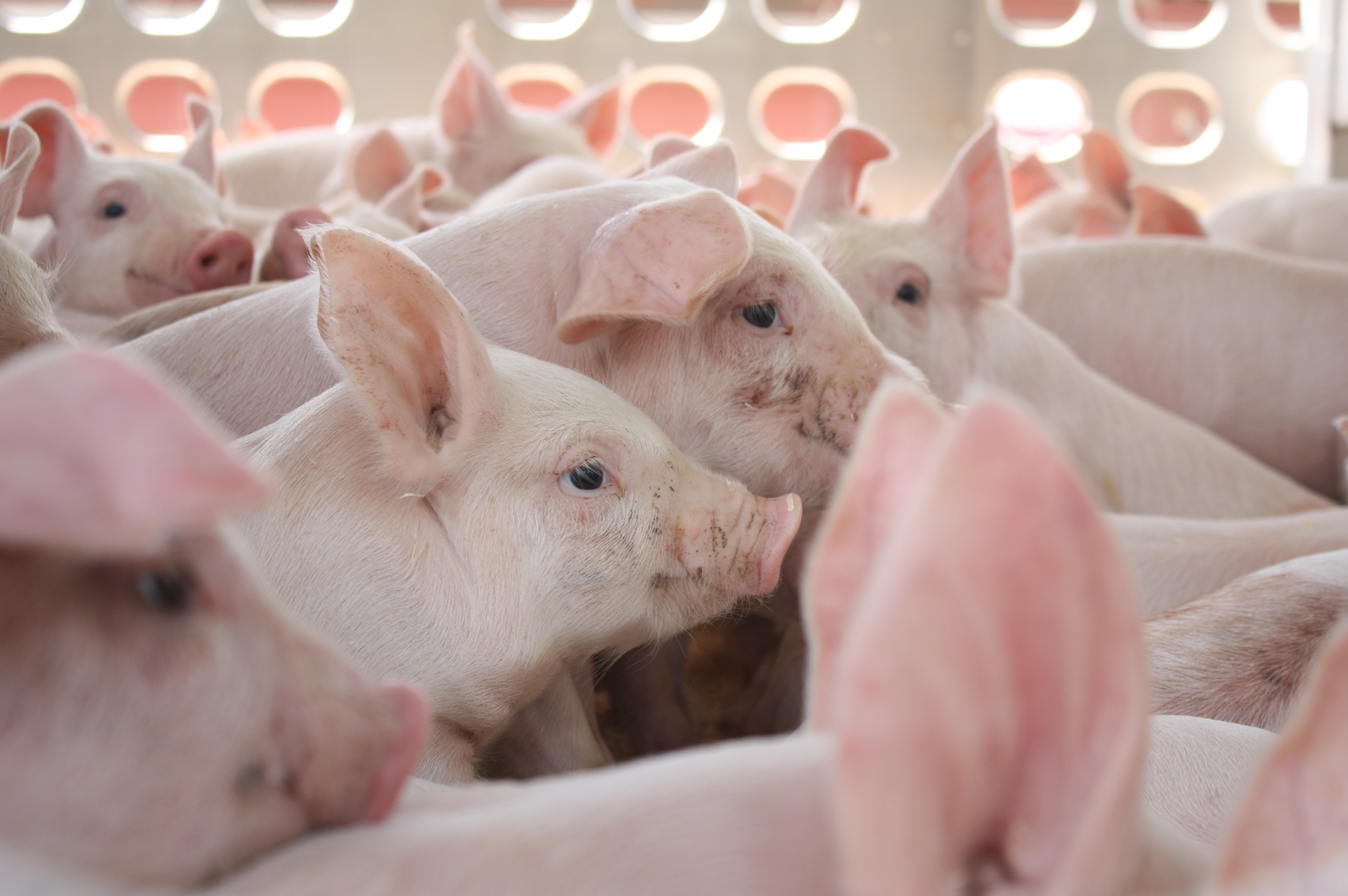What You Need To Know About Livestock Antibiotic Usage